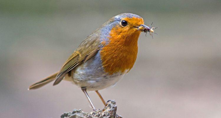 Oiseau se trouvant dans la réserve naturelle de Daluis